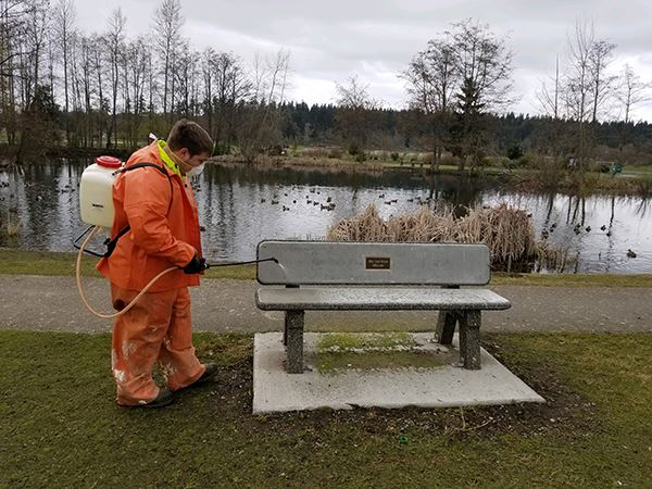Sequim Public Works Crew member sanitizes a City bench
